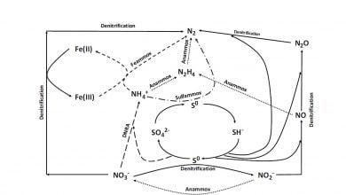 Photo of فرایند آناموکس برای حذف نیتروژن