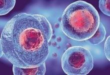 سلول بنیادی کارآمد