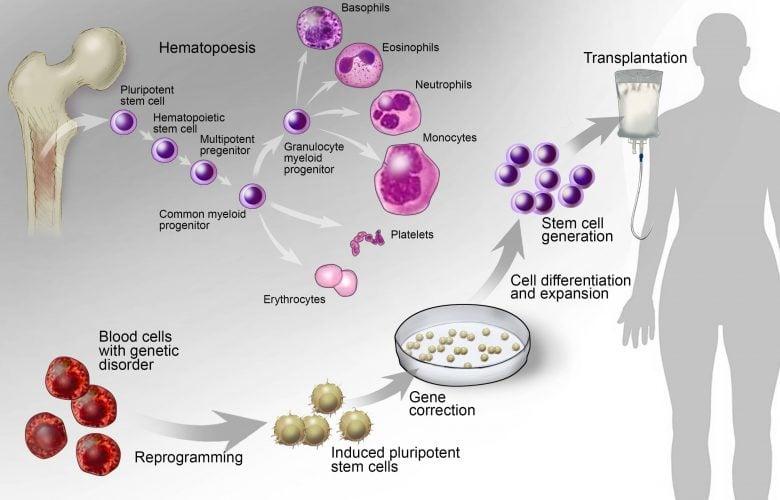 کاربردهای بالینی رویکردهای سلول درمانی