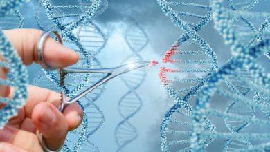 Photo of شناسایی پروتئینی برای درمان بیماری ALS