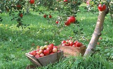Photo of افزایش تولید محصولات ارگانیک با کودهای زیستی محققان کشور