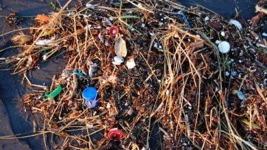 Photo of تولید اکسیژن و آلودگی های پلاستیکی اقیانوس ها