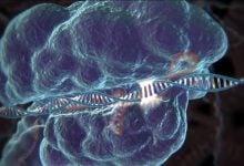 Photo of درمان اوتیسم به کمک اصلاح ژن