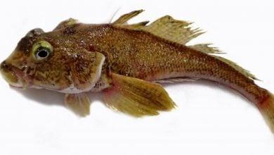 Photo of ماهیهای قطب جنوب، مدلی برای بررسی بیماریهای استخوانی در انسان