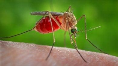 مبارزه با مالاریا با سم عنکبوت