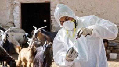 Photo of تولید بیش از ۹۷ درصد از واکسن و داروهای دام و طیور و آبزیان در کشور