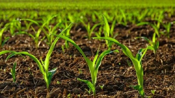 گیاهان زراعی