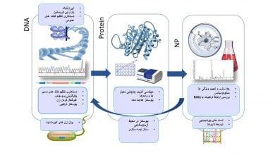 Photo of روشهای تولید فرآوردههای طبیعی در قارچها