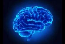 Photo of بیدار کردن سلول های بنیادی برای باز کردن پتانسیل ترمیم کنندگی مغز