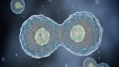 تقسیم سلولی خارج از سلول