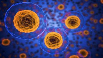 Photo of پیوند موفقیت آمیز سلولهای بنیادی با تیمار آنتی بادی