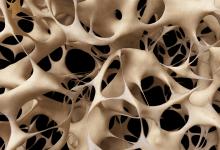 Photo of ترمیم ضایعات غضروفی بر پایه جوهرهای زیستی