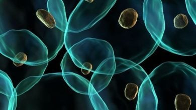 Photo of رمزگشایی پتانسیل نهفته در سلولهای بنیادی