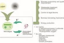 تولید فوتوبیولوژیکی هیدروژن