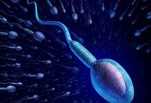 Photo of تعیین جنسیت جنین موش با جداسازی اسپرم
