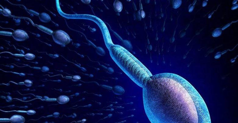 تعیین جنسیت جنین موش