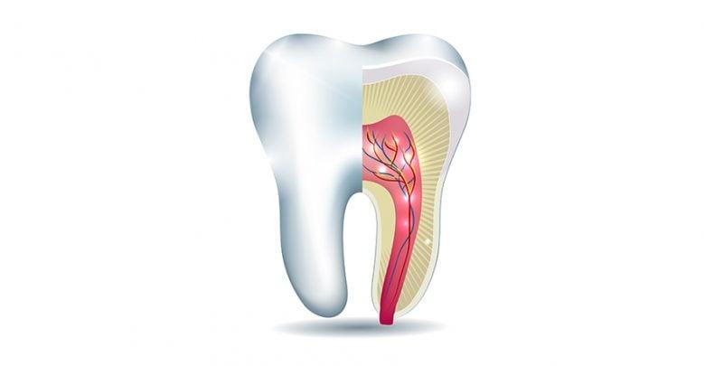 بانک سلولهای بنیادی پالپ دندان