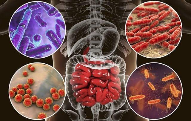 میکروبیوم دستگاه گوارش