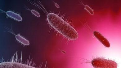 Photo of کمک به افزایش تعامل دوستانه باکتریها