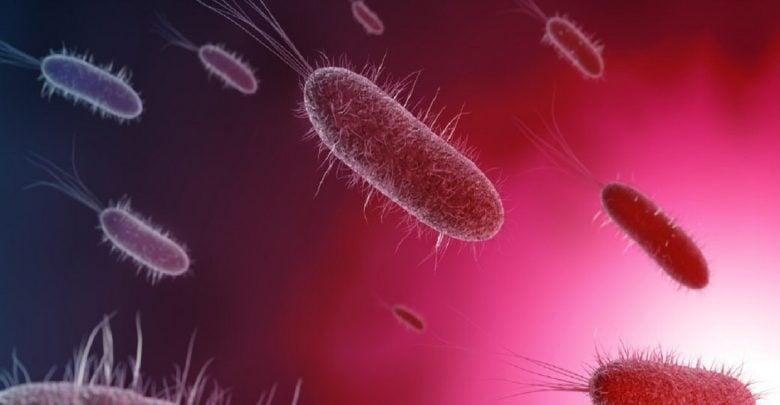 کمک به افزایش تعامل دوستانه باکتریها