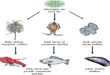 Photo of استفاده از میکروجلبک ها در صنعت آبزی پروری