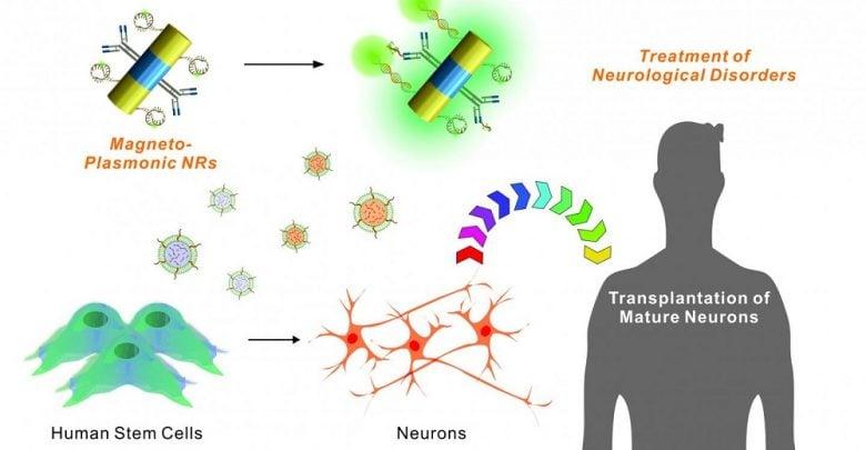 پیوند سلول های بنیادی با کمک فناوری نانو