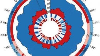 Photo of استفاده از یک روش جدید برای توالییابی ژنوم ویروس