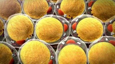 Photo of دارو رسانی به تومور به کمک سلول های چربی