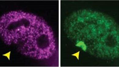 فعالسازی مجدد ژنهای پشتیبان در آزمایشگاه