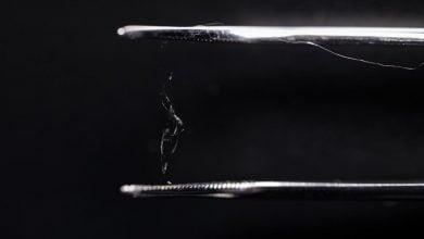 Photo of رقابت ماده تولیدشده از الیاف سلولزی و ابریشم تار عنکبوت با پلاستیک ها