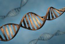 Photo of افزایش سرعت پیری با جهش در DNA