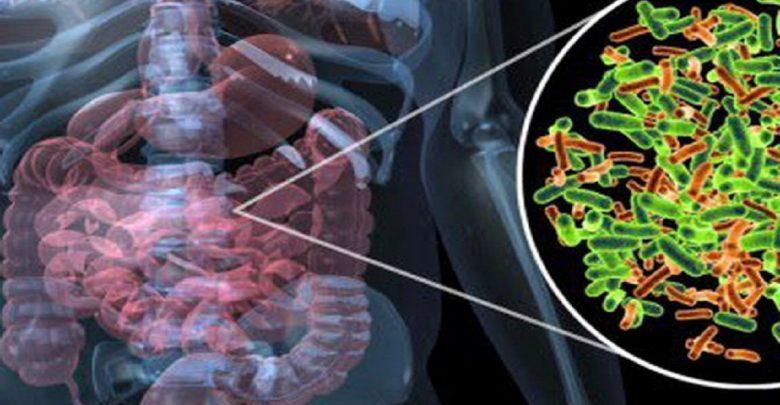 جوامع میکروبی در روده انسان