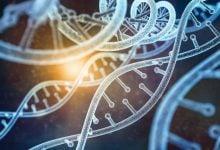 Photo of درمان بالقوه ایدز با کمک مهندسی ژنتیک