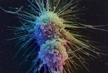 Photo of تولید یک ترکیب گیاهی برای مقابله با سرطانهای مقاوم به دارو