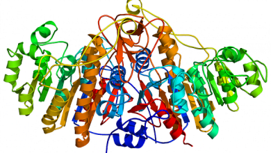 Photo of دستیابی به پروتئینی نوترکیب برای التیام زخمهای مزمن