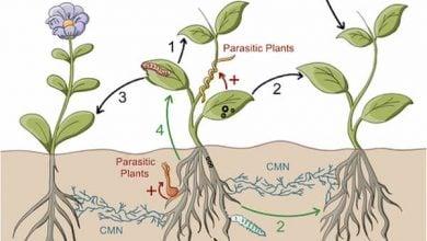 Photo of نقش همسایه های زیر زمینی در رشد گیاهان