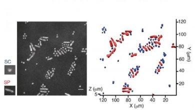 Photo of روش فلورسانسی برای شناسایی سلول های تک میکروبی