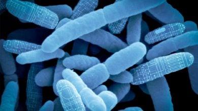 Photo of باکتری های مهندسی شده با هدف تولید سوخت های زیستی