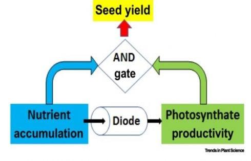 رابطه پیوسته بین مصرف نیتروژن و رشد بذر