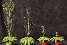 Photo of افزایش فتوسنتز راهی برای حل مشکل جهانی کمبود غذا؟