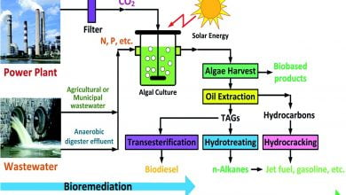 Photo of استفاده از میکروجلبک در تصفیه فاضلاب و تثبیت دی اکسید کربن