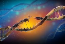 Photo of تصویربرداری از نحوه ترمیم DNA آسیب دیده
