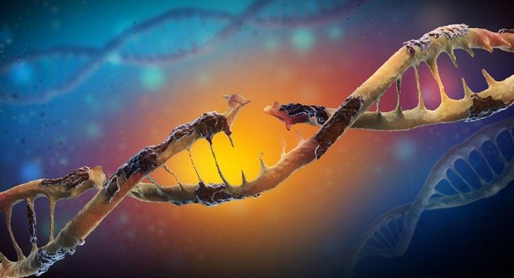 تصویربرداری از نحوه ترمیم DNA آسیب دیده