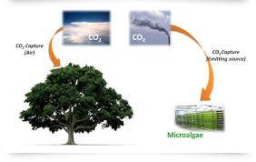 تثبیت دیاکسید کربن