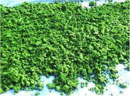 تولید زیستتوده از میکروجلبک