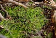 Photo of حاصلخیزی و سلامت خاک با فعالیتهای بیولوژیکی میکروجلبک ها و سیانوباکتری ها