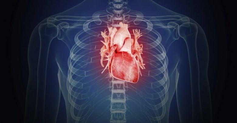 مدلسازی حملات قلبی با کمک سلول های بنیادی