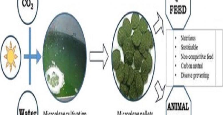 میکروجلبک و مکملهای غذایی
