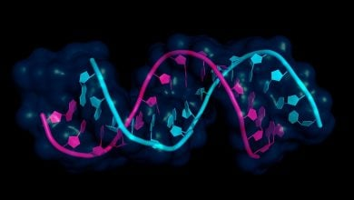 Photo of سرکوب تومورهای سرطان پستان توسط microRNA