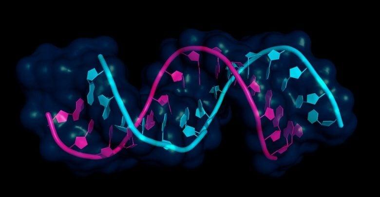 سرکوب تومورهای سرطان پستان توسط microRNA